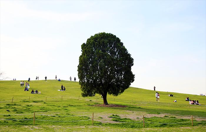 올림픽공원의 나홀로 나무