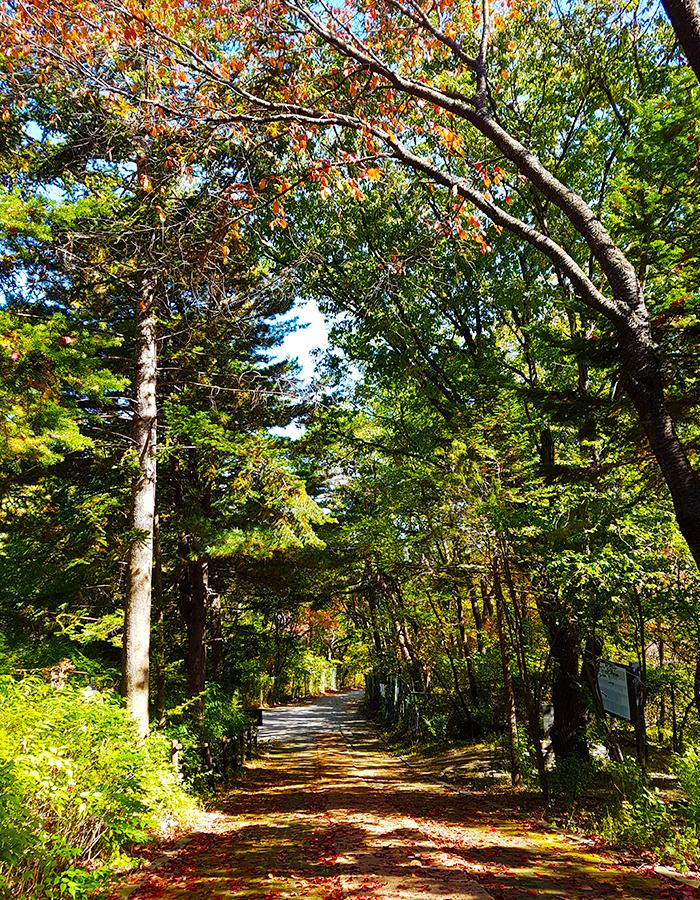 Chodae-gil Trail