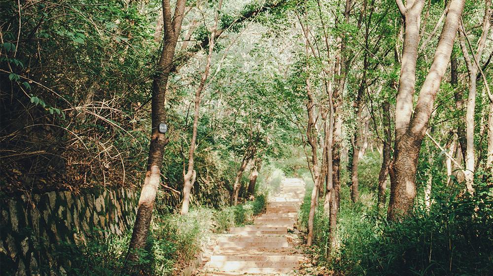 안산 자락길 메타세쿼이아 숲길의 모습