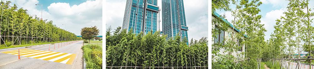 이촌한강공원 대나무숲의 모습