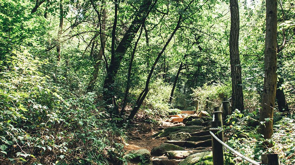 호암산 잣나무 삼림욕장의 모습