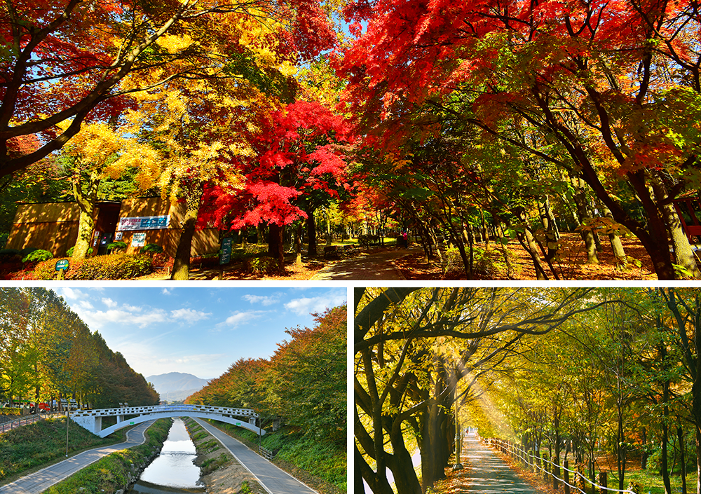 Three pictures showing autumn foliage and trails with one showing a sky blue bridge crossing over a stream with two paths on each side, a long stretching forest trail, and bright red and yellow leaves in a forest