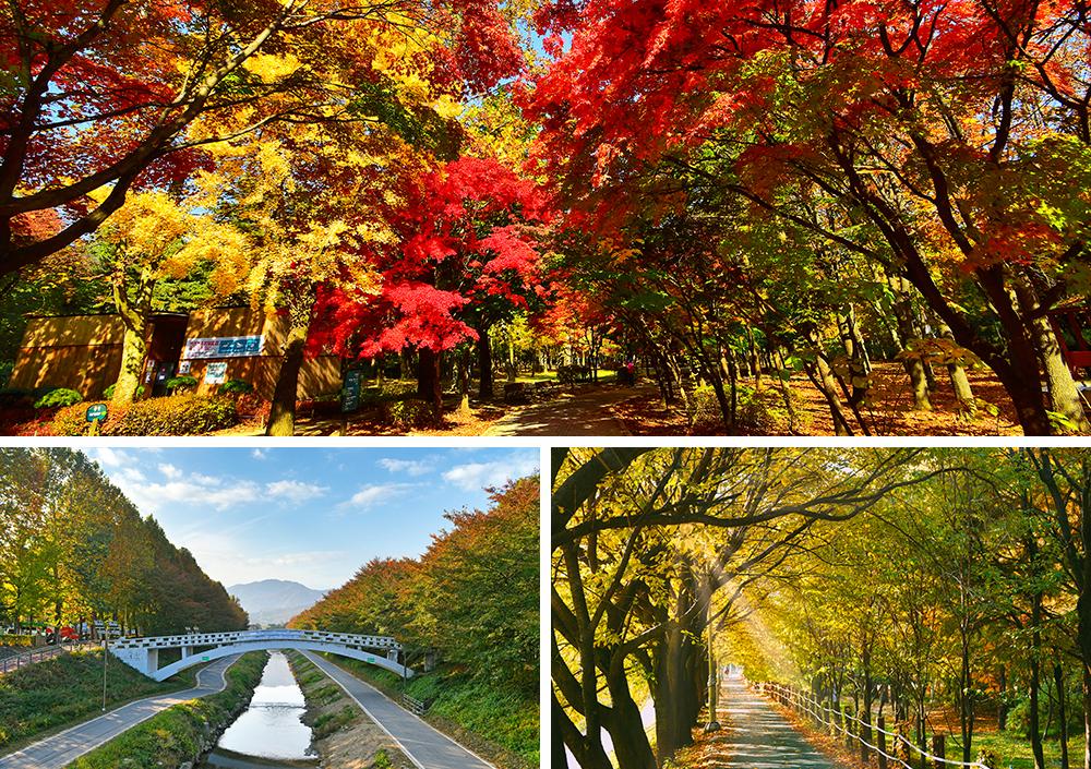 照片1:良才市民之林楓葉, 照片2:橋梁, 照片3:懸鈴木林道