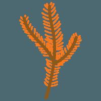Значок лист метасеквойи