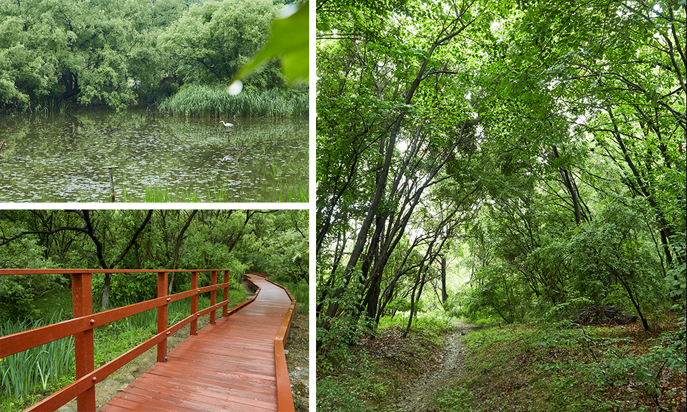 Three pictures showing the Gil-dong Ecological Park from different spots with a pond, a wooden walkway painted in crimson red, and dense forest with a small narrow trail carved through it.