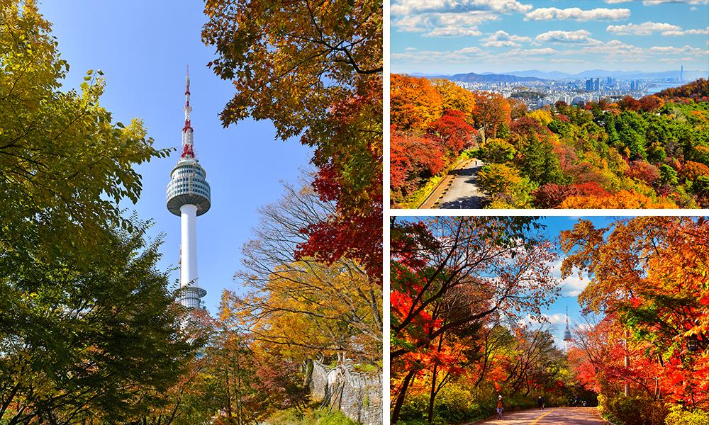 사진 3개의 조합.왼쪽사진:남산을 바라본 가을풍경모습,오른쪽 첫번째:단풍이 물든 남산 남측순환로 가을풍경,오른쪽 두번째: 단풍이 물든 남산 둘레길 가을풍경.