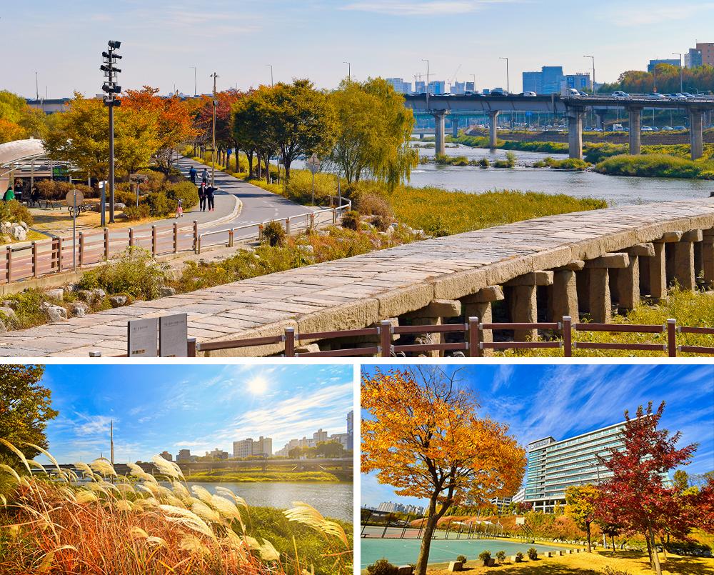 사진 3개의 조합.첫 번쨰 사진:성동구 살곶이 길 가을풍경, 두 번째 사진:갈대가 보이는 은행나무길 가을풍경, 세 번째 사진:성동구 은행나무길 가을풍경.