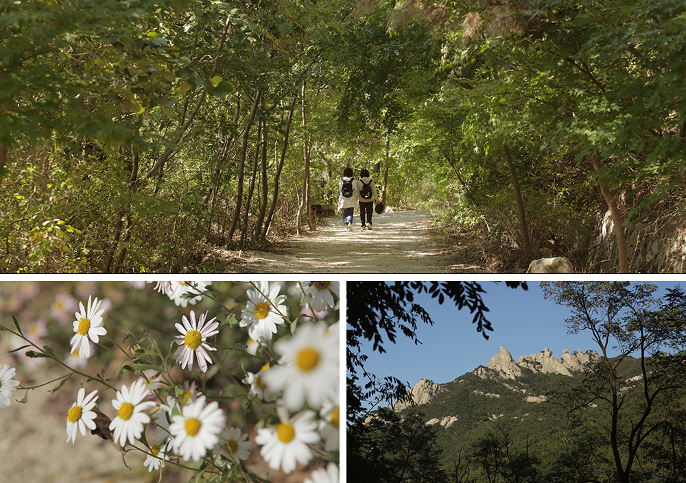 Top picture: Two women walking down the Wooiryeong Road trail in a tunnel of trees, Bottom left picture: Close-up of white flowers facing toward the sun; Bottom right picture: A distant mountain range just beyond the tree line