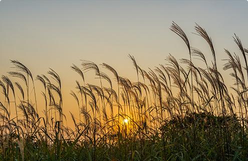 Фото заходящего солнца на фоне высокой травы