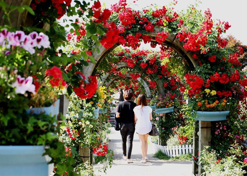 首爾大公園玫瑰節